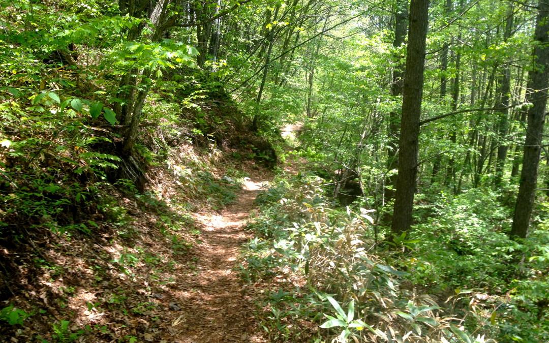 Trail Jog