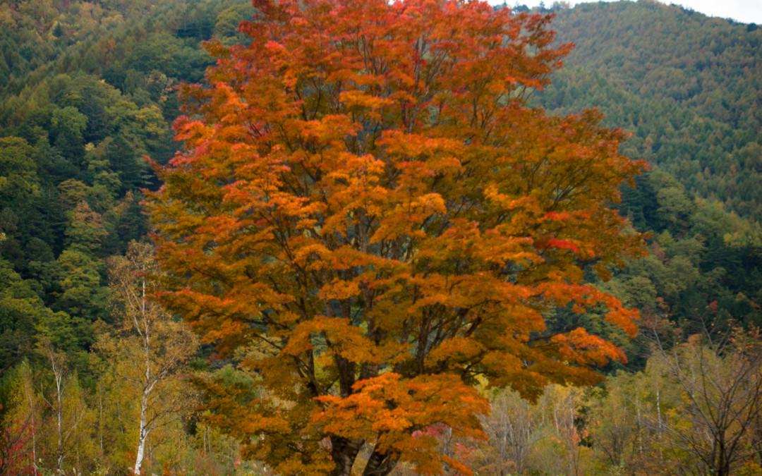 Fall in Norikura