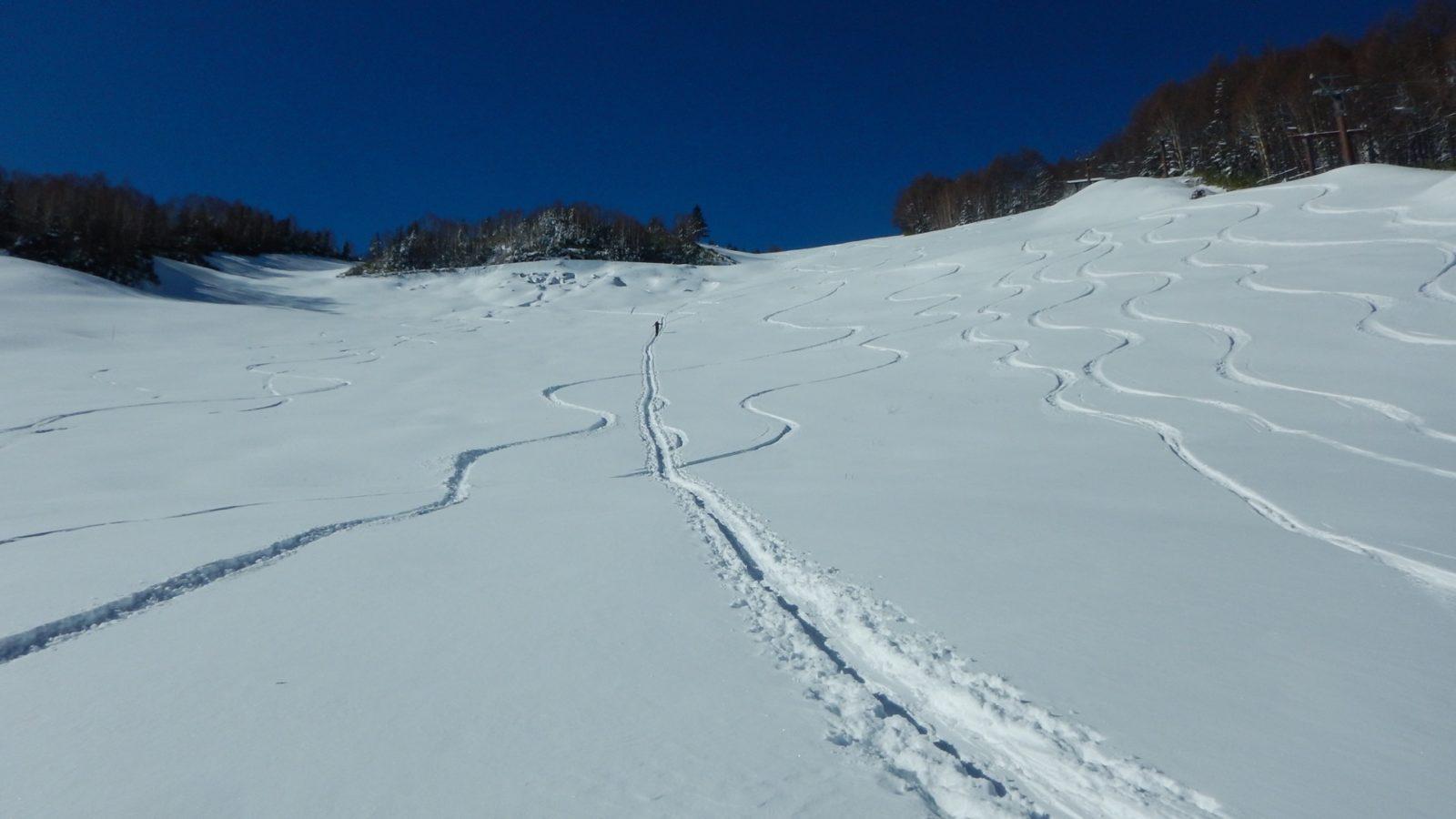 スキー場内なのでバックカントリーではないけど、ありでしょう。